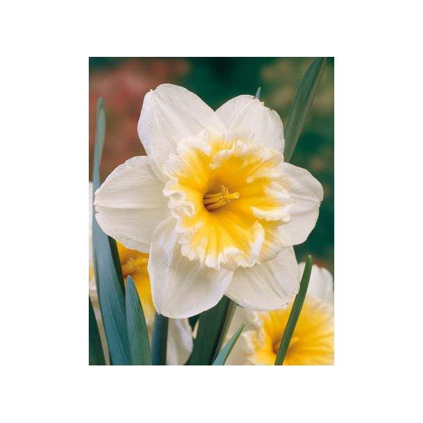 Narcis. Slim Whitman. Løg