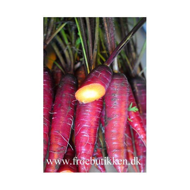 Gulerod. Cosmic purple. Frø