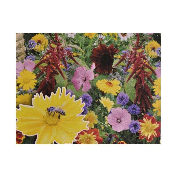 Blomsterblanding til bier. X-tra stor portion. Frø