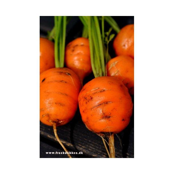 Karotter. Paris market. Frø.