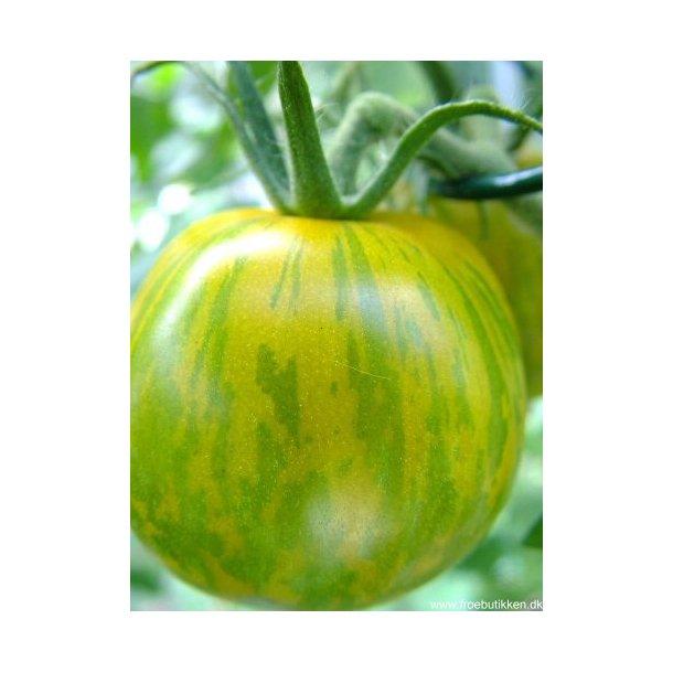 Tomat. Green zebra. Frø.