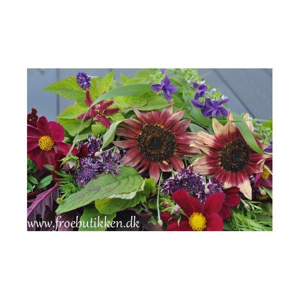 Blomsterblanding. Blomsterbondens drøm. ID1770-5688. Frø