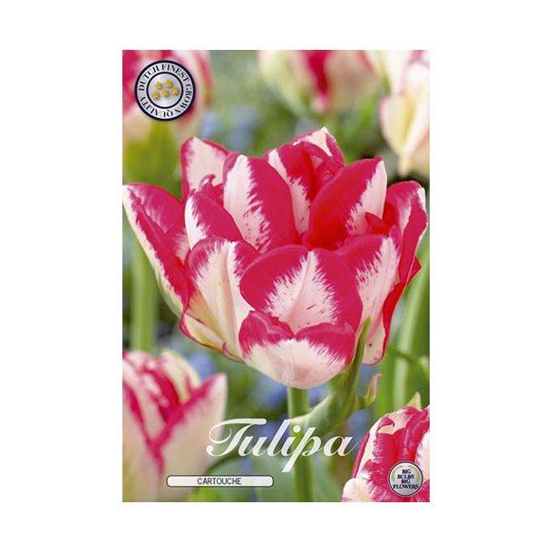 Tulipan. Cartouche Løg