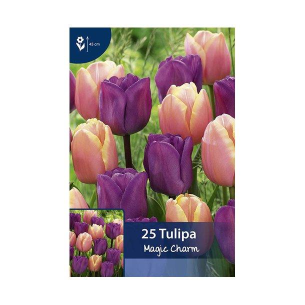 Tulipan. Magic charm. Storpak. Løg.