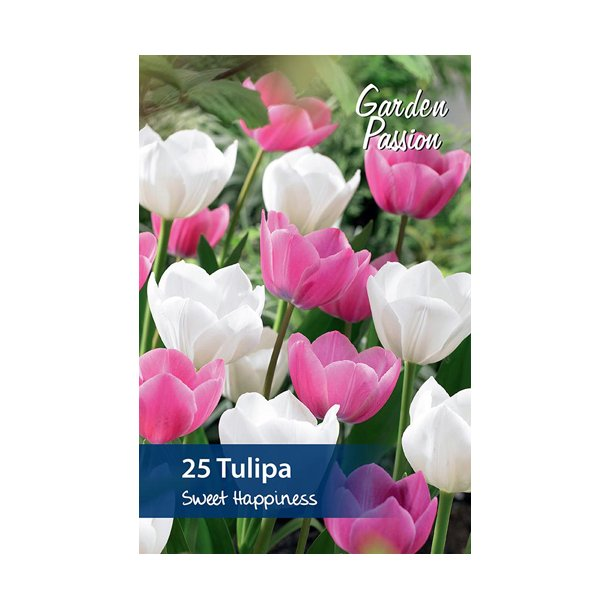 Tulipan. Sweet happiness. Løg.