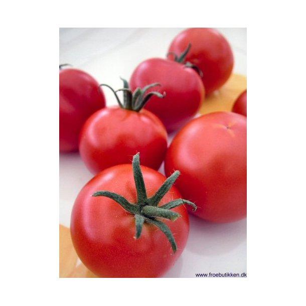 Tomat. Tamina. ID1803-4911. Frø.